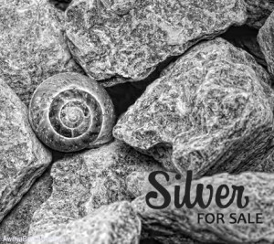 Silver Paparazzi Jewelry items for sale Album cover photo