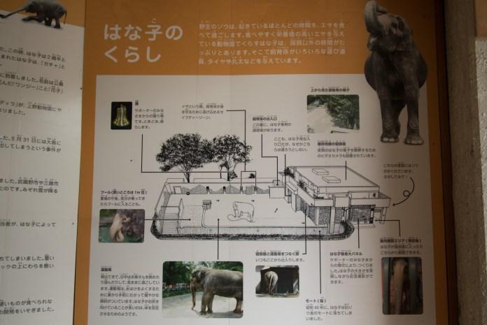 ゾウのはな子さんの暮らし(井の頭公園の動物園 / 東京・吉祥寺)