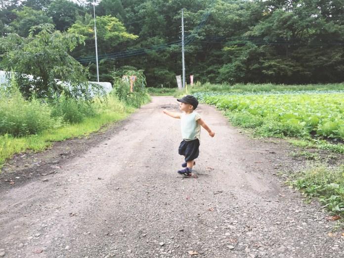 キャベツ畑を抜ける鼓太郎(2歳4ヶ月)