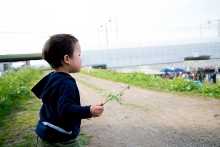 花を摘む2歳の息子