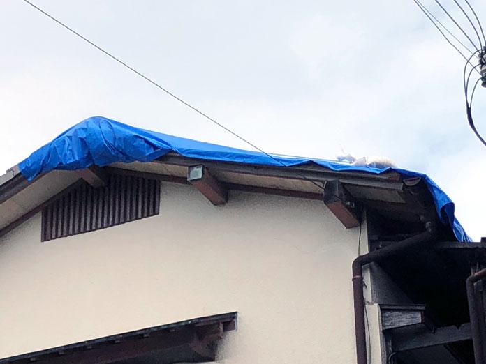 ブルーシートをかぶった屋根