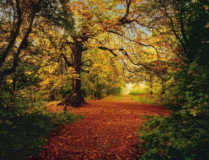 8-068_Autumn_Forest