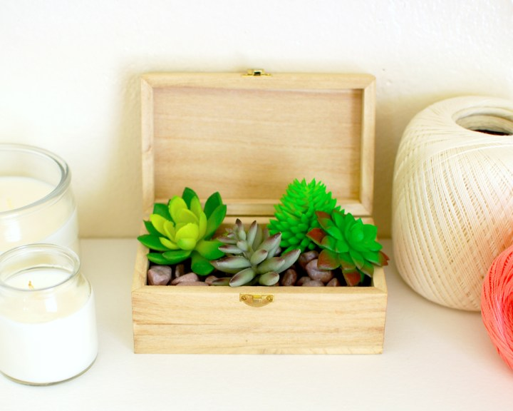 Succulents in a Box - Paper and Landscapes