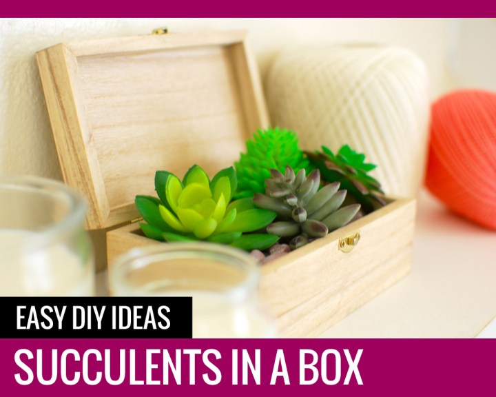 Succulents in a Box – Cute DIY Ideas