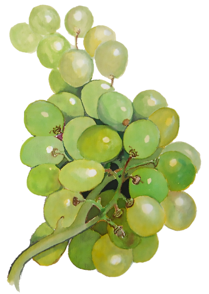grapes green bunch