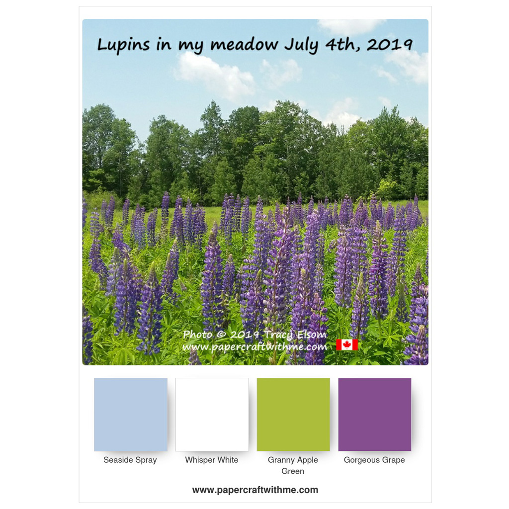 This is a photo of the purple lupins in my flower meadow. www.papercraftwithme.com