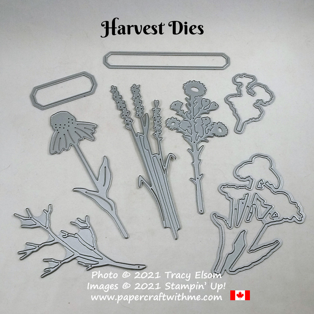 Harvest Dies complement and coordinate with the Nature's Harvest Stamp Set from Stampin' Up! #papercraftwithme
