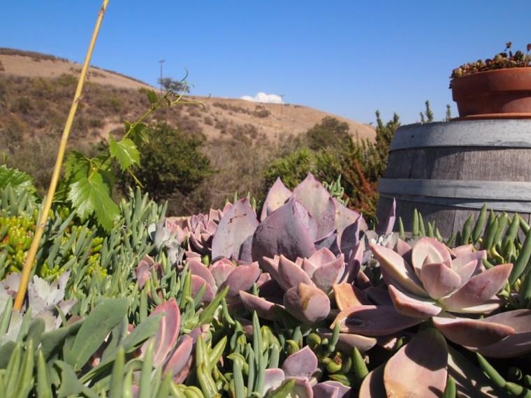 Plants Santa Barbara