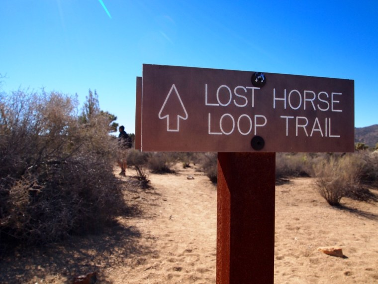 lost horse loop trail Joshua Tree National Park