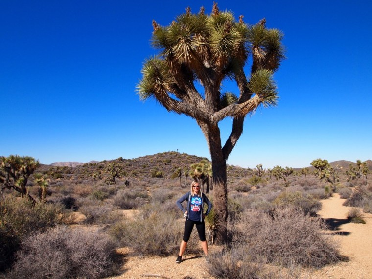 Desert Hikes Joshua Tree National Park