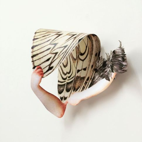 Lepidoptera (2016)