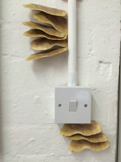 Tortoiseshell fungus (installation), 2016
