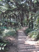 temple forest