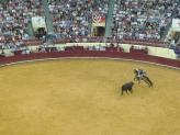Dressage horse dodges bull