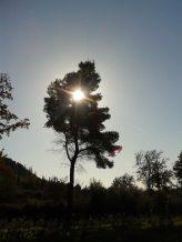 Under the Grecian Sun