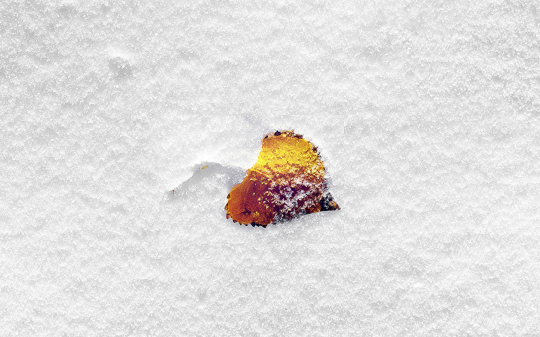 Mb62 Wallpaper Boo 201 Snow Leaf