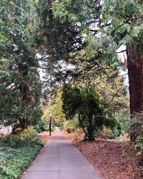 University of Oregon sidewalk Eugene