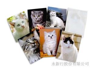 動物便條系列貓便條紙-便條紙,2