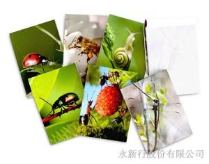 動物便條系列昆蟲-便條紙_M-14446,2