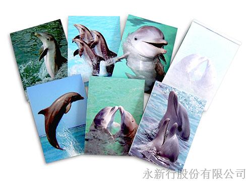 動物便條系列海豚便條紙