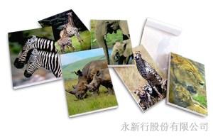 動物便條系列野生動物-動物便條紙_M-14410,2