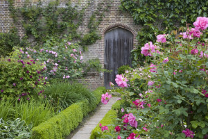 The Rose Garden in June with a paved path and neat hedging at Sissinghurst Castle Garden, near Cranbrook, Kent.