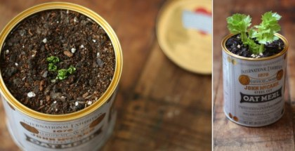 regrow vegetables easily free cheap