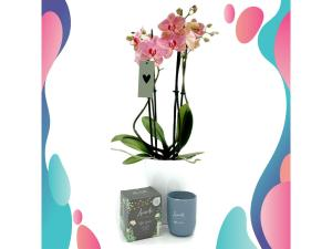 Cadeauset - ForHome