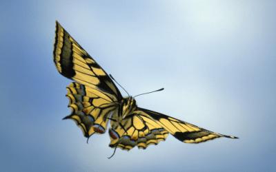 Dites-le avec des papillons !