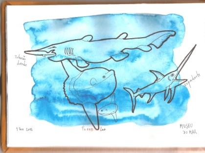 Tubarões e Peixe-Lua no Museu do Mar, Cascais