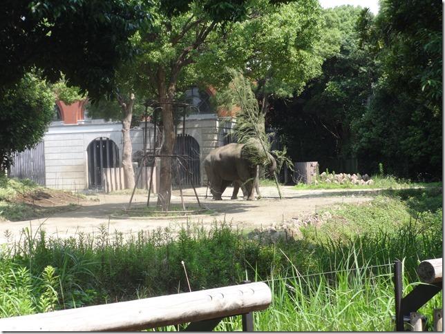 ズーラシア象さん