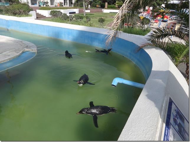 泳ぐペンギンたち
