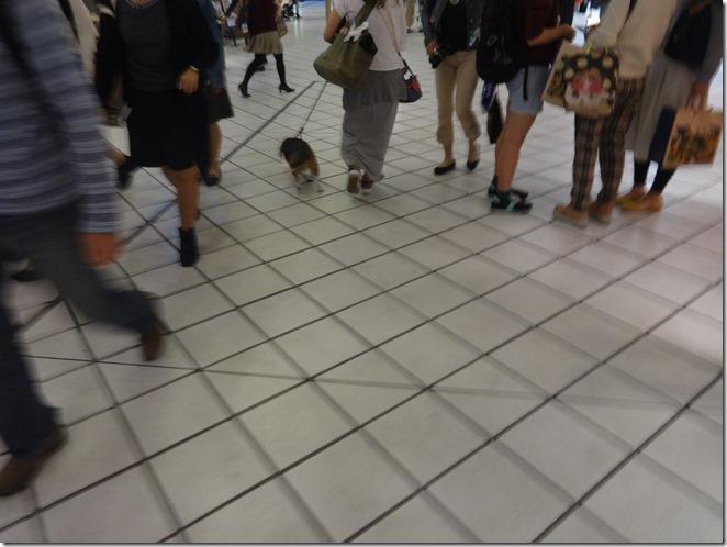 横浜ベイクオーターで散歩するワンちゃん