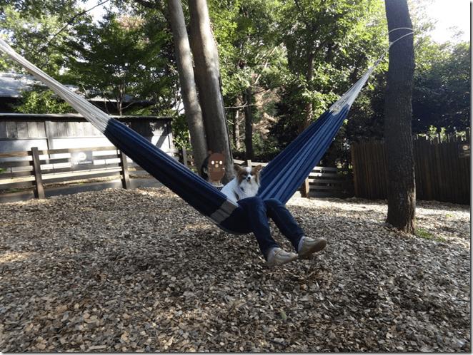 伊豆の愛犬と泊まれるホテルウブドの森のドッグランにあるハンモックに乗るママとアリア