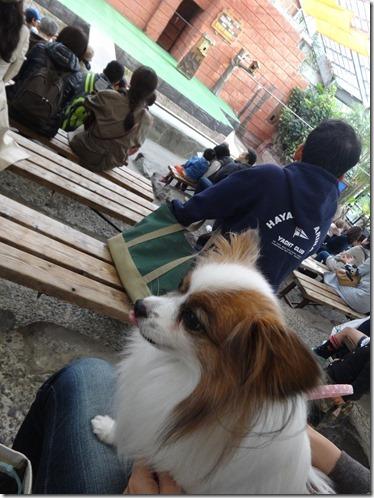 愛犬と一緒にショーも観れます