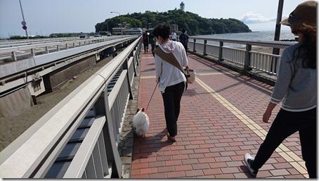 愛犬パピヨンのアリアと江の島大橋を渡る