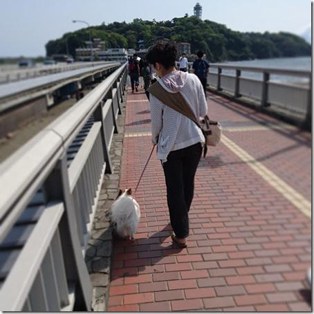江の島散歩する愛犬パピヨンのアリアとアリアのママ