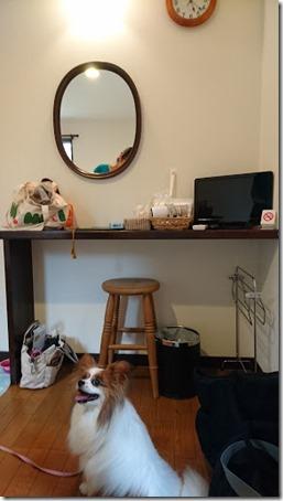 北軽井沢のペットと泊まれる宿花闊歩のゲストルームで嬉しそうな我が家の愛犬パピヨンのアリア