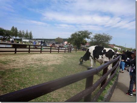 ペット(犬)と遊べる千葉県のマザー牧場で飼われている牛