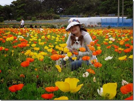 千葉県のペットと遊べるポピーの里館山ファミリーパークのポピー畑内での記念撮影