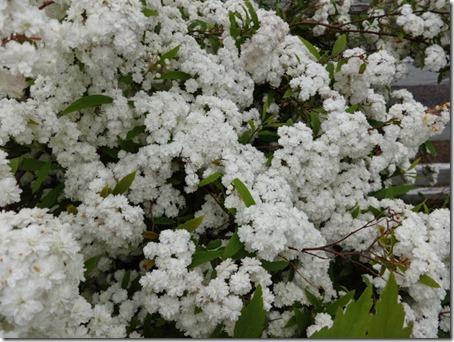 千葉県のペットと遊べるポピーの里館山ファミリーパークのホワイトガーデン4枚目