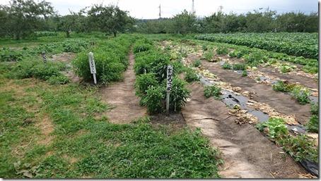 北軽井沢のペットと野菜果物狩りできる石田観光農園のたかのつめ