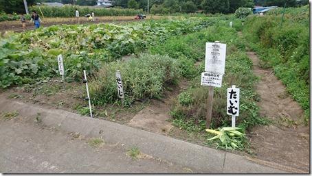 北軽井沢のペットと野菜果物狩りできる石田観光農園のタイムとセイジと枝豆