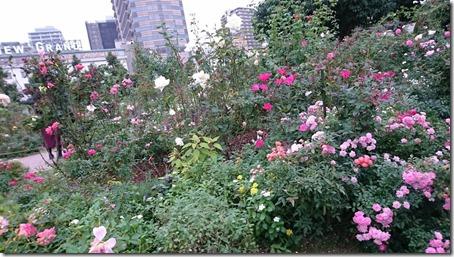 山下公園のきれいなお花