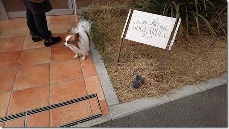 ドッグデプト湘南江の島店のドッグラン施設ドッグガーデン