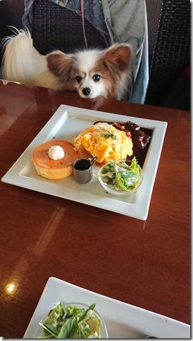 愛犬と入れる星乃珈琲店のビーフととろ~りチーズのオムライス&パンケーキプレートとパピヨンのアリア