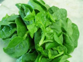 indian-spinach
