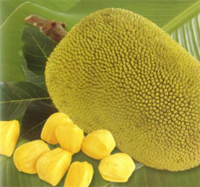 jackfruit_national_fruits_of_Bangladesh01 2