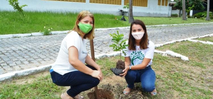 Dia do Pau-brasil: plantio de mudas da espécie marca a data no UNI-RN