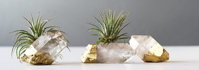 Fabulous Non Hanging Air Plants Ideas Featured